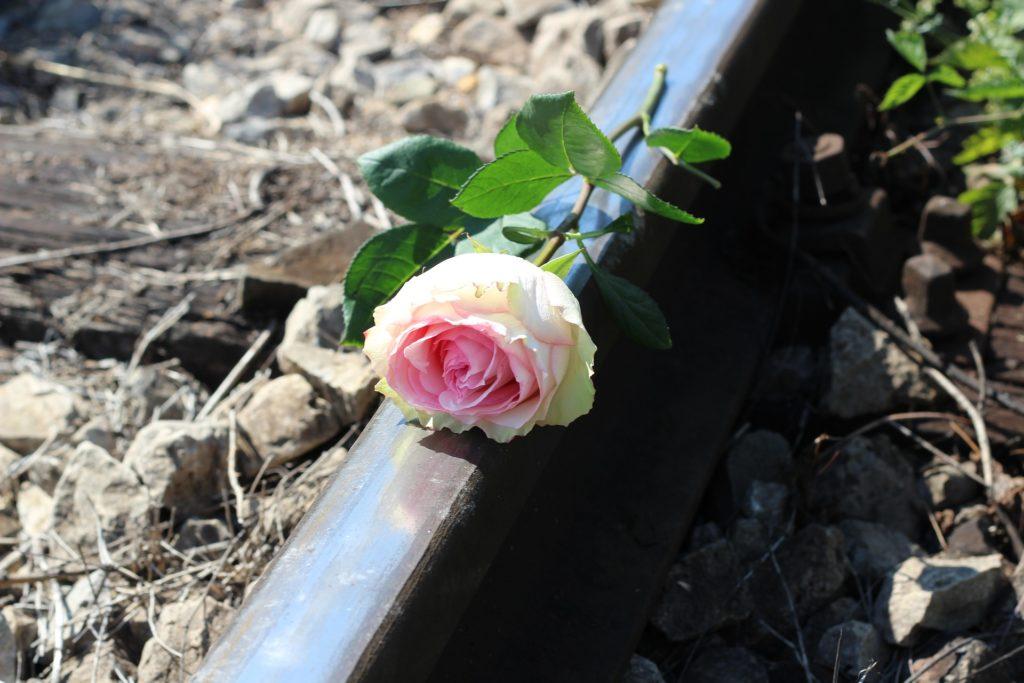 Rosa sobre la vía del tren
