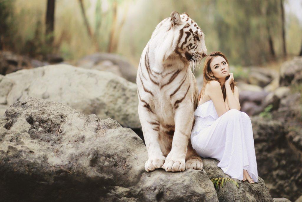 niña en la naturaleza sentada junto a un tigre blanco